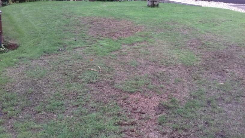 Rotting Lawn question photo 1