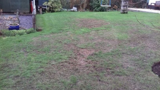 Rotting Lawn question photo 2