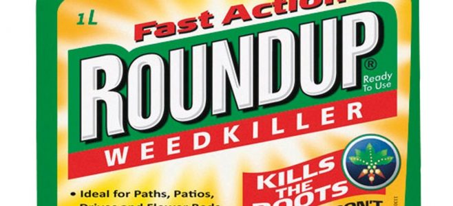 Glyphosate is the main ingredient in the weedkiller Roundup