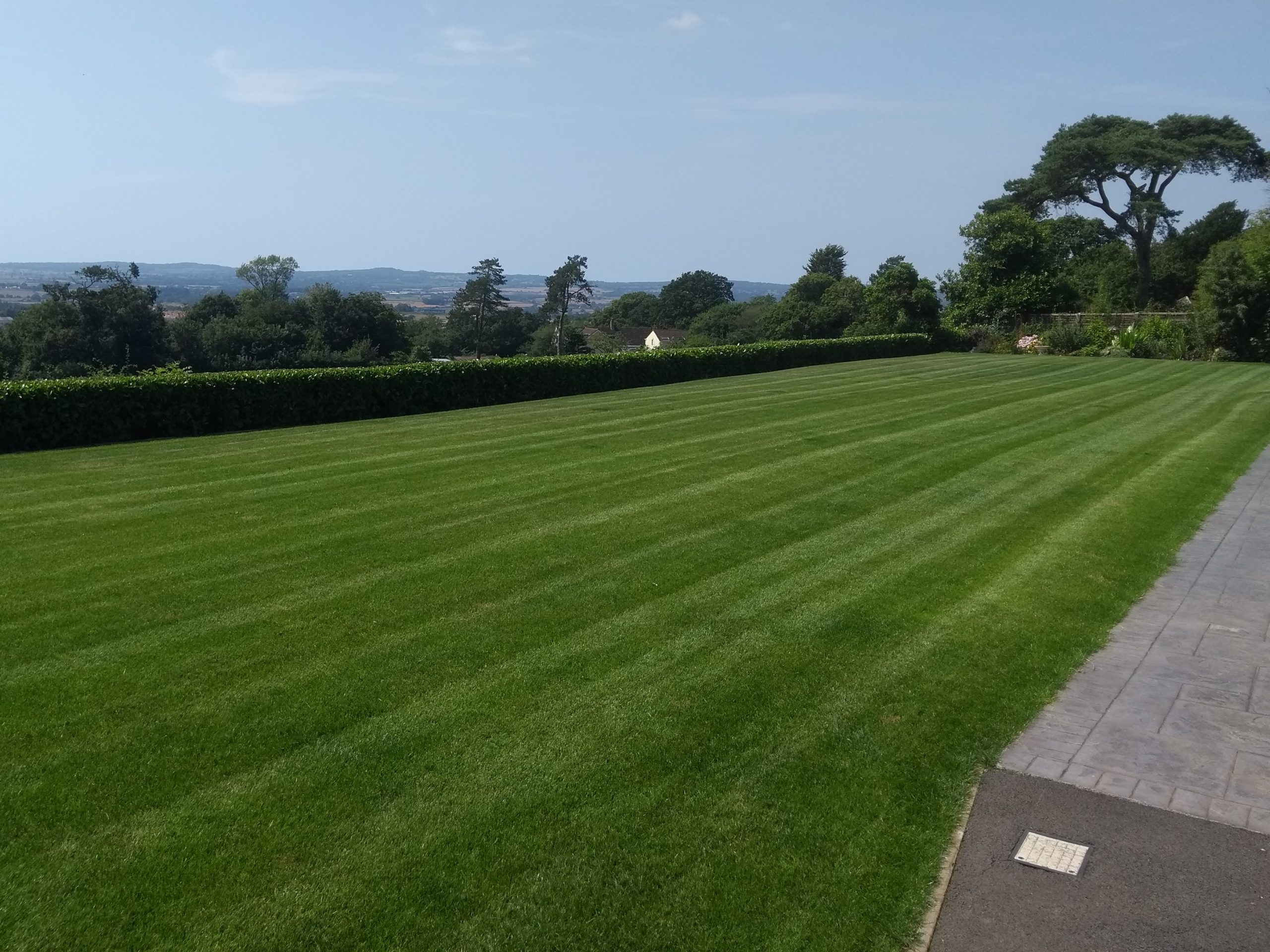 Should you seed or turf your lawn? This is a beautiful seeded lawn in Exeter