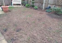 If you have leatherjackets in your lawn it may end up looking like this!
