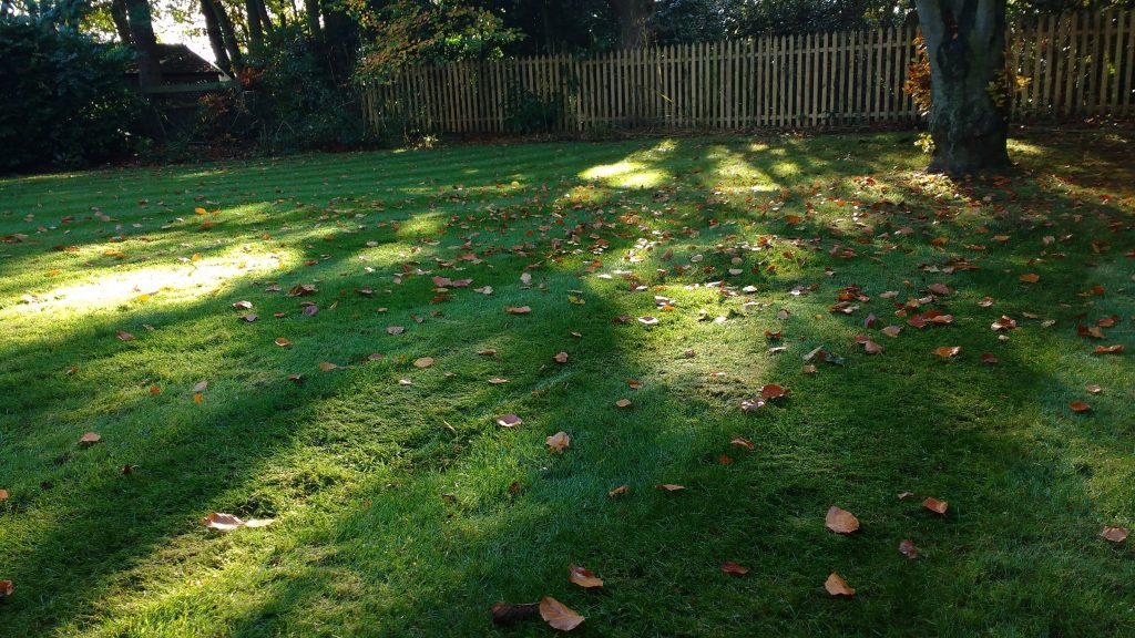 A lawn in the autumn light
