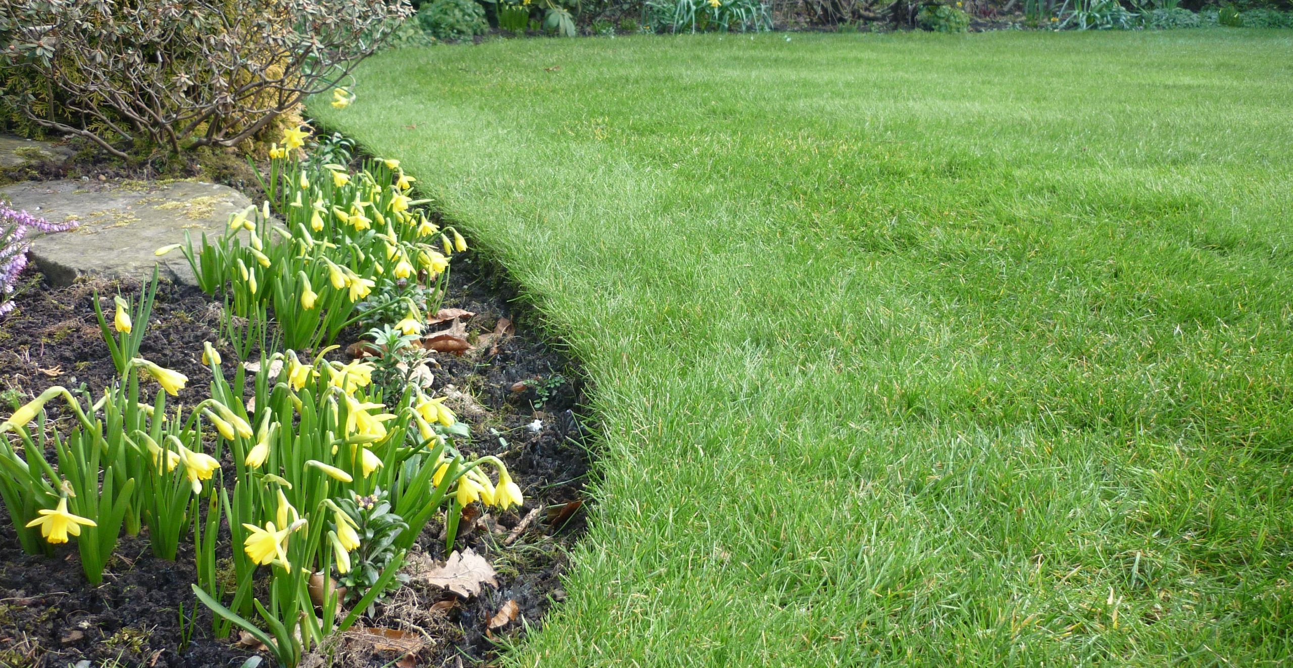 A beautiful lawn ready for a spring lawn feed