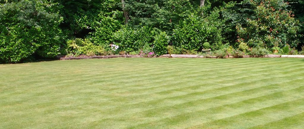 A lovely lawn photographed in summer for the the lawn care blog.