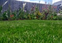 A lovely thick lawn in Exminster. A good example to describe mowing your lawn around lawn treatments.