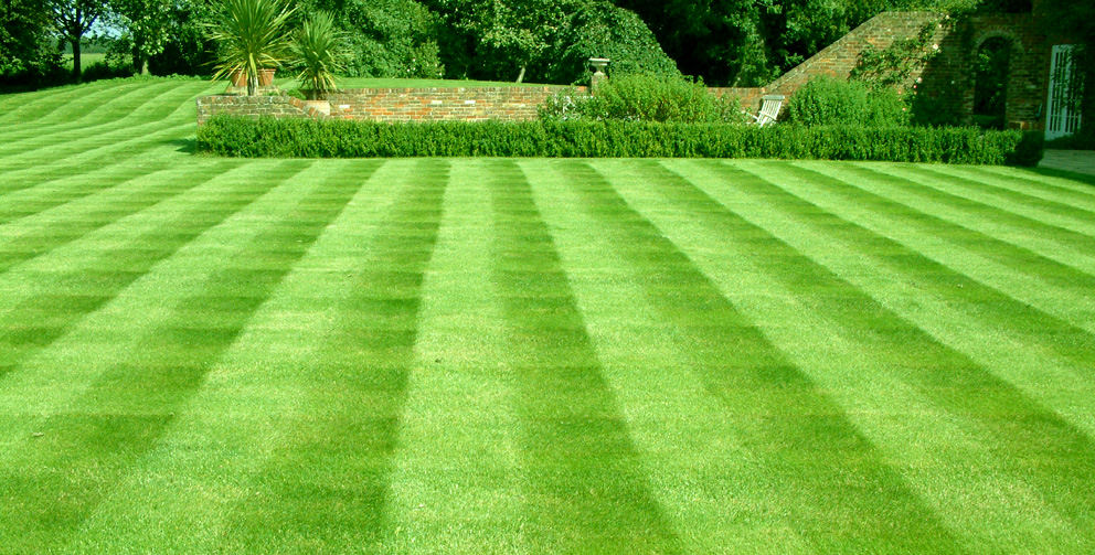 A nice lawn