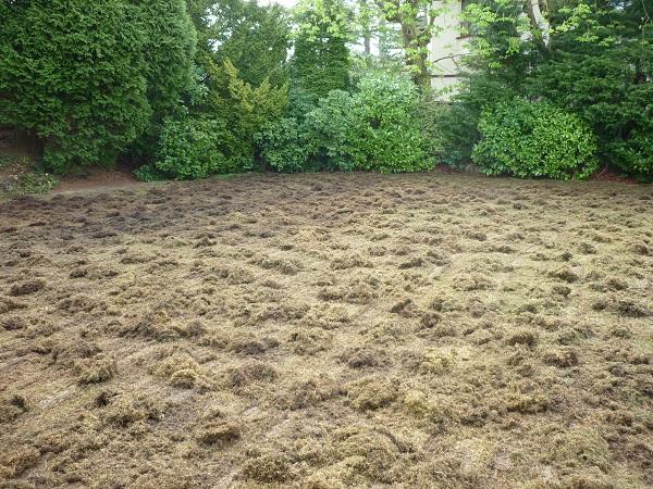 A scarified lawn