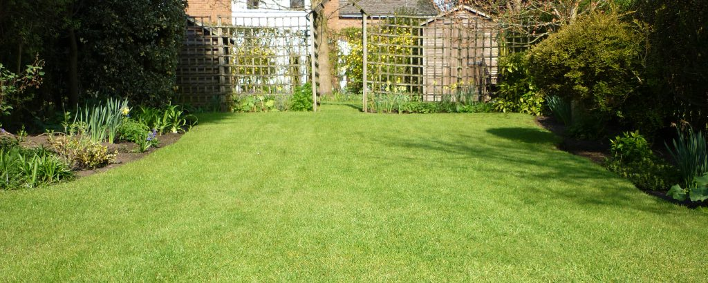 A small fine lawn in spring time