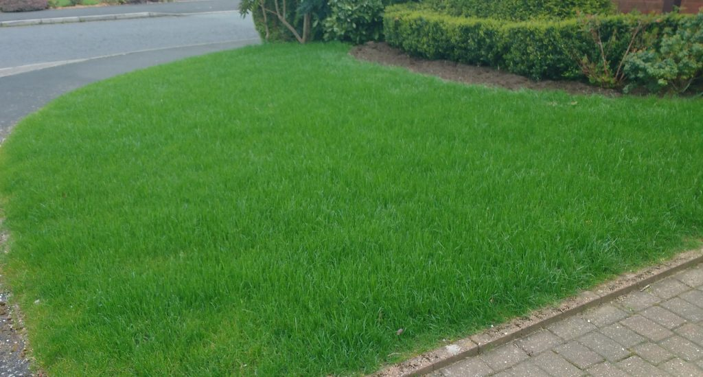 A small front lawn in Dawlish