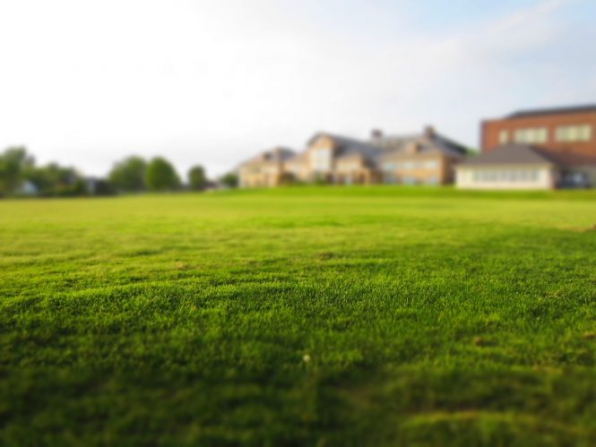 A very large lawn