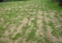 A badly scarified lawn