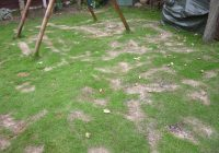 A burnt lawn