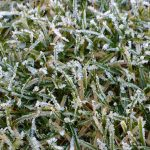 Close up of frost on a lawn