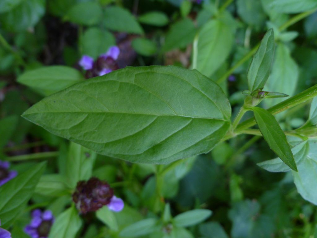 Common self heal leaf