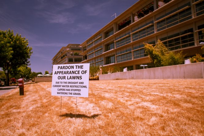 Dry Lawn in California