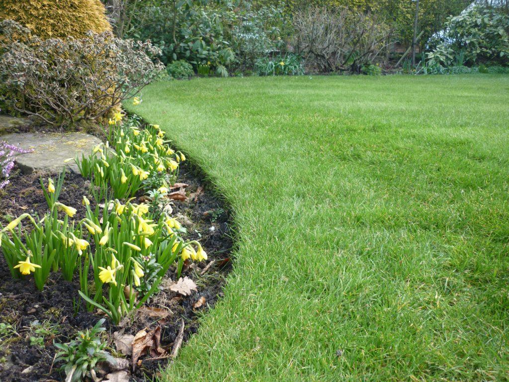 A spring lawn.