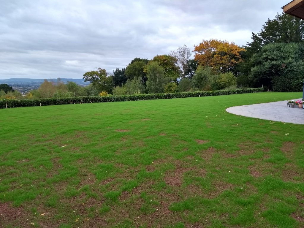 Exeter Lawn Regeneration - October 2018