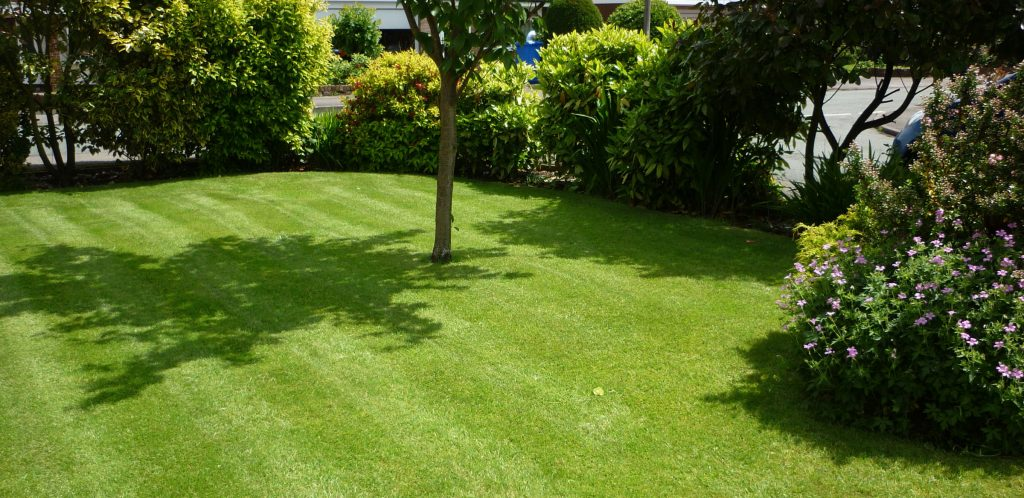 Fine lawn surrounding a small tree in St Thomas, Exeter