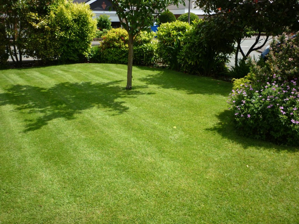 Small front lawn with a small tree.