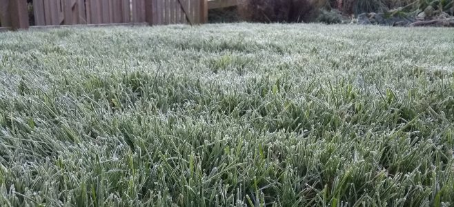 Frost on The Lawn Man's Test Lawn