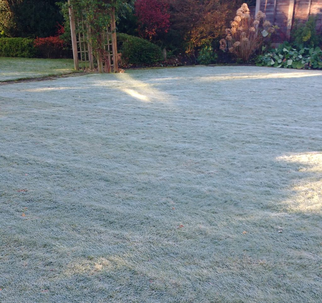 Frost on a cold morning