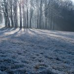 Do not mow your lawn in the winter if it is frosty.