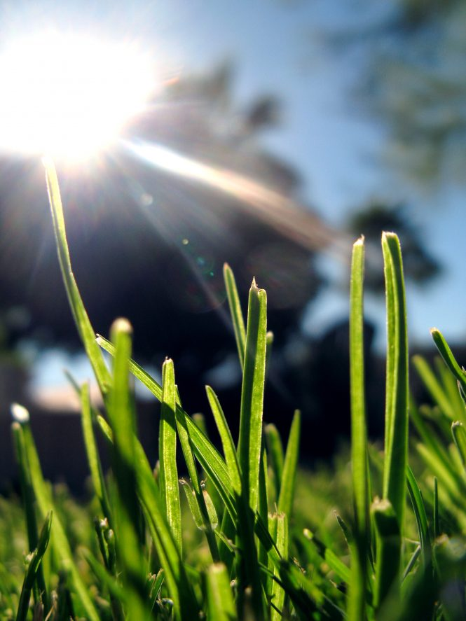 Grass in the Sunshine
