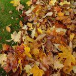 Lawn Leaves