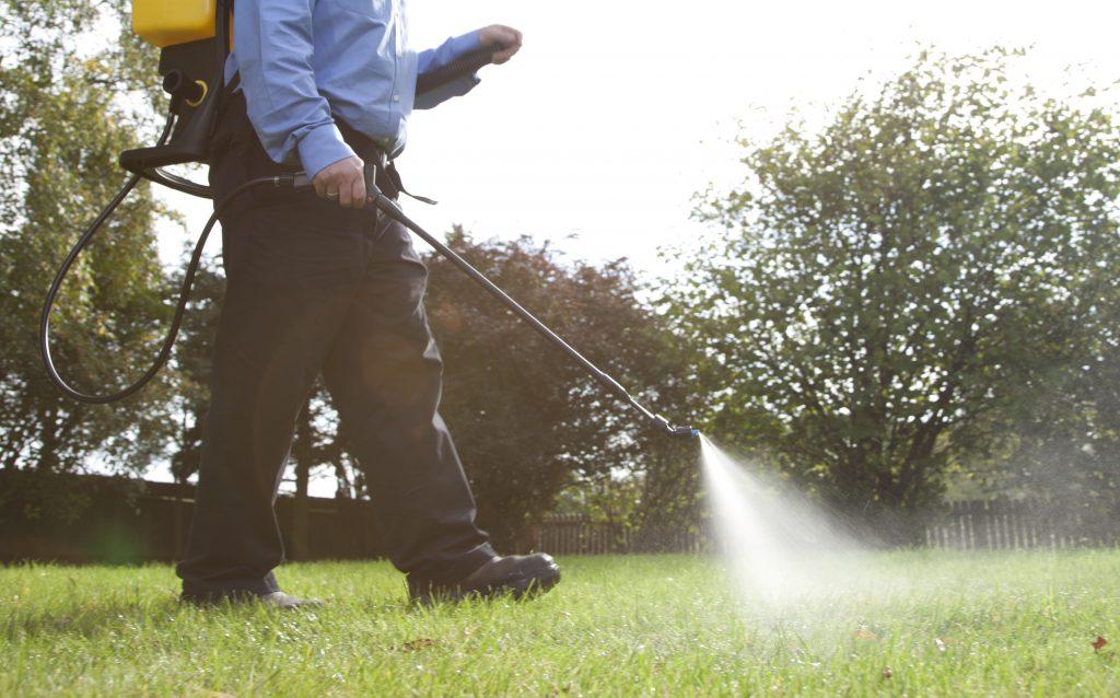 Spraying a liquid feed on a lawn.