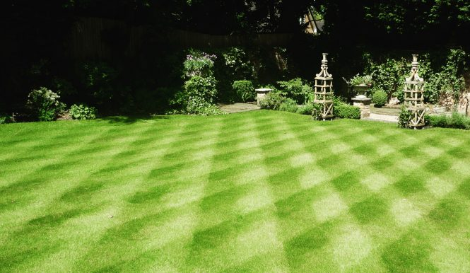 Lawn care service in Exeter