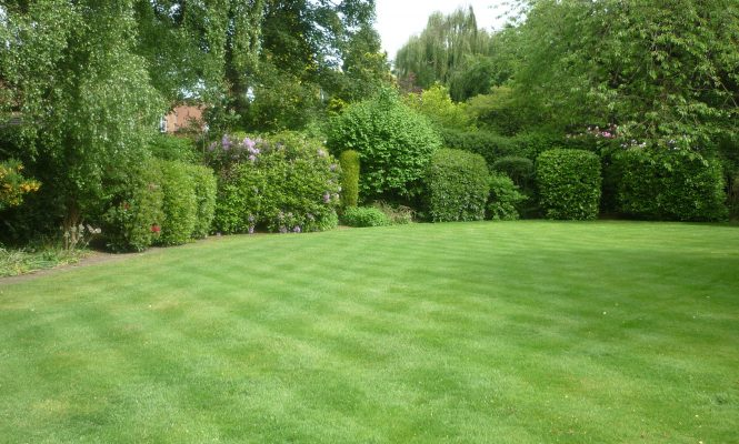 A lawn in Cheadle Hulme