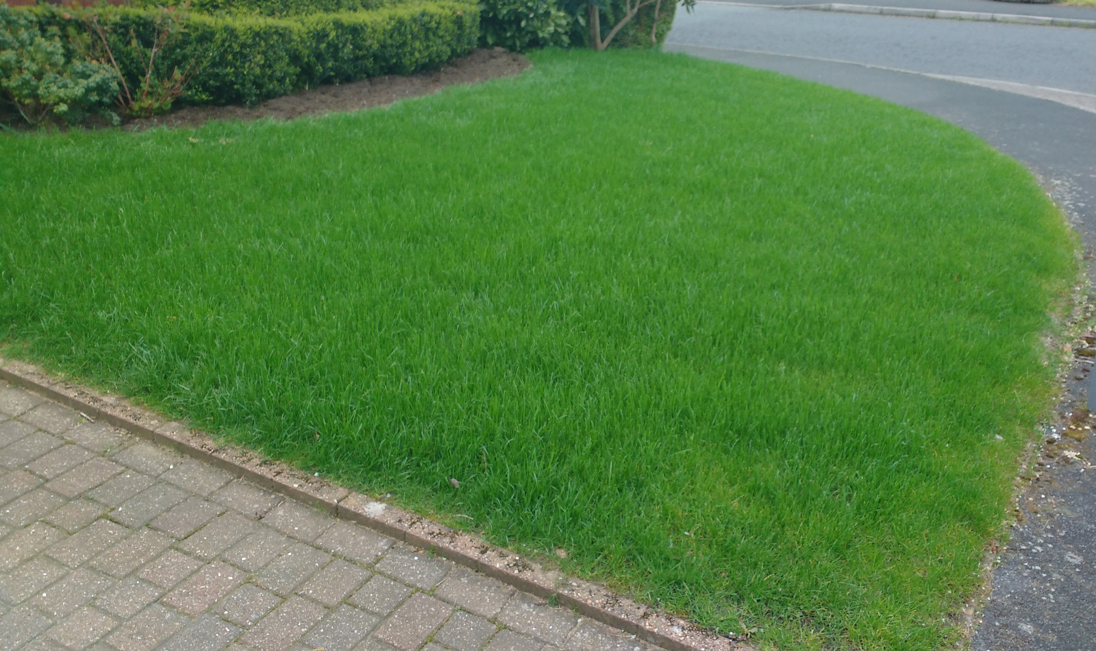 Lawn in Exwick