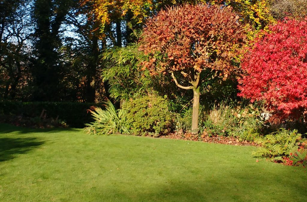 A lawn in autumn