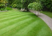How to improve the look of your lawn