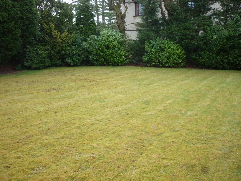 Lawn regeneration