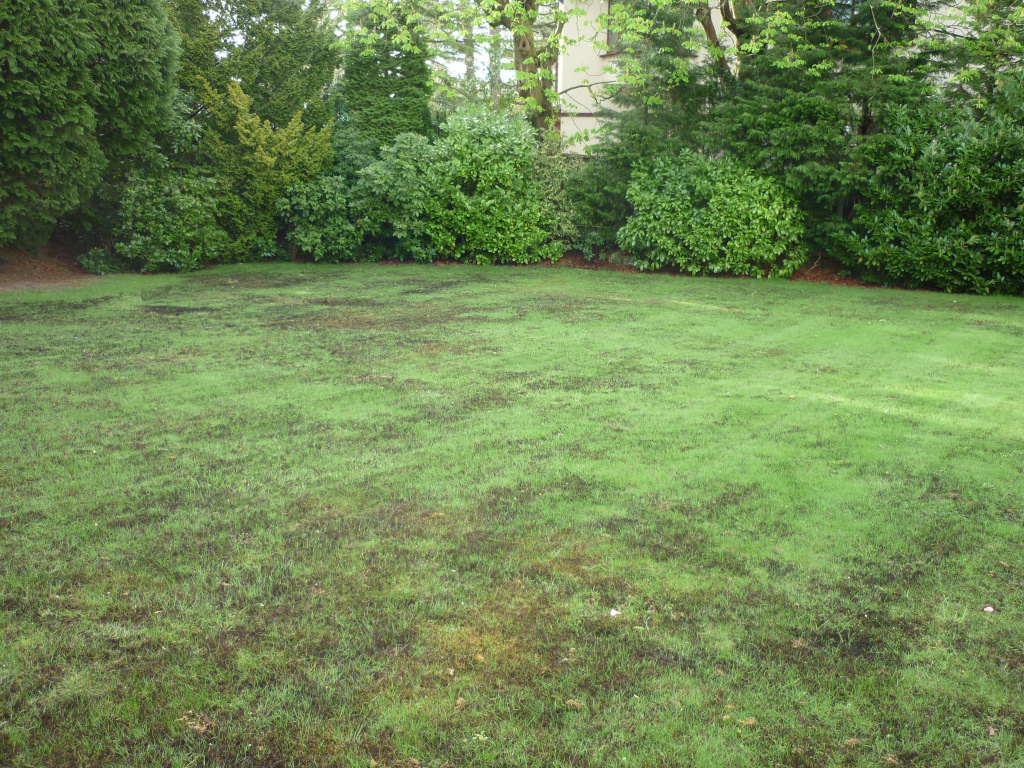 Lawn regeneration - Moss Control Result