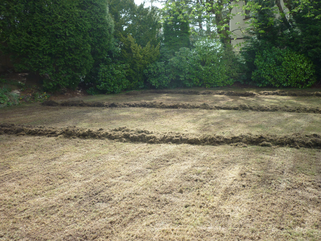 Lawn regeneration - Clearing up