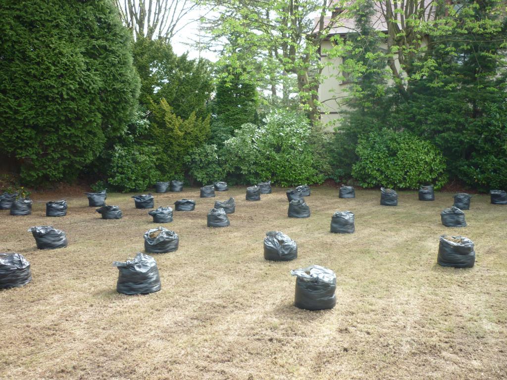 Lawn regeneration - Bagging
