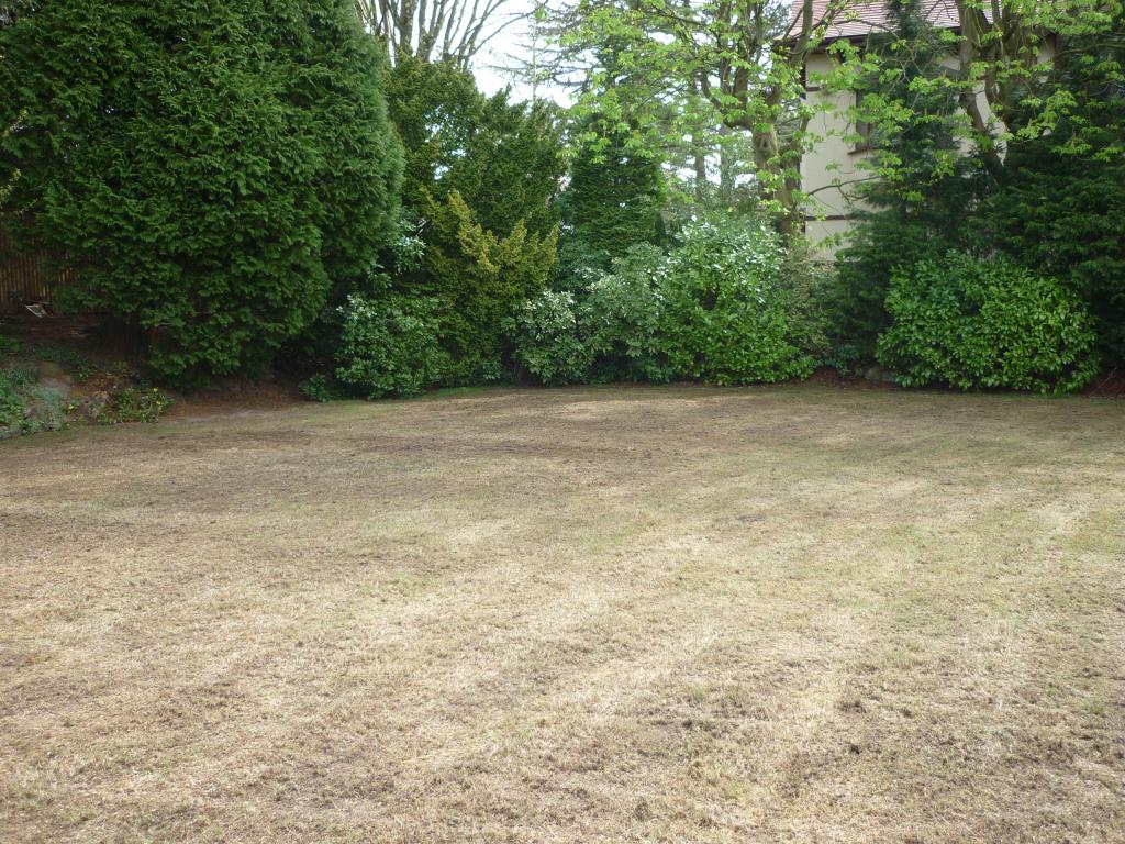 Lawn regeneration - Scarification complete