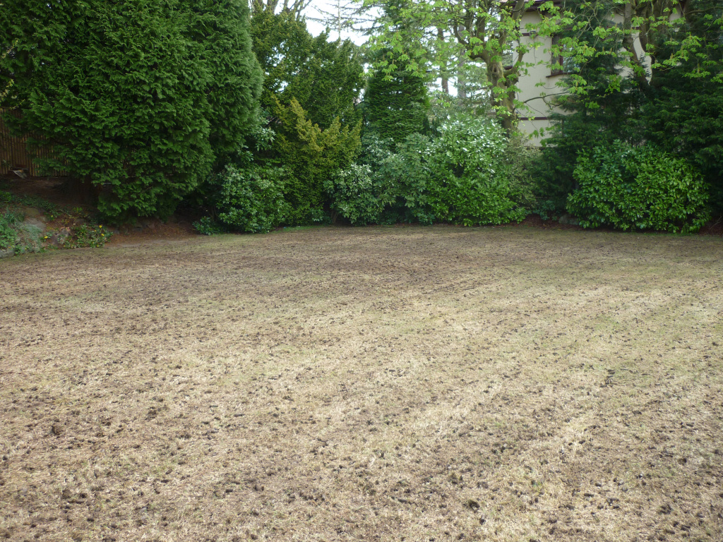 Lawn regeneration - Hollow-tine aerating