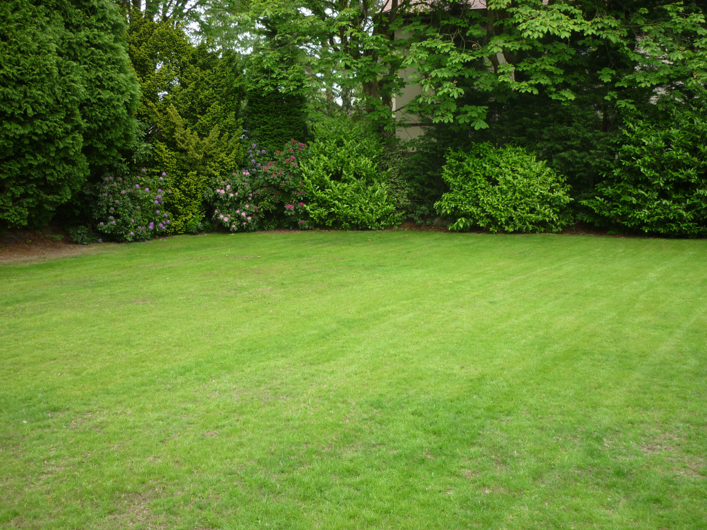Lawn regeneration - 6 Weeks later