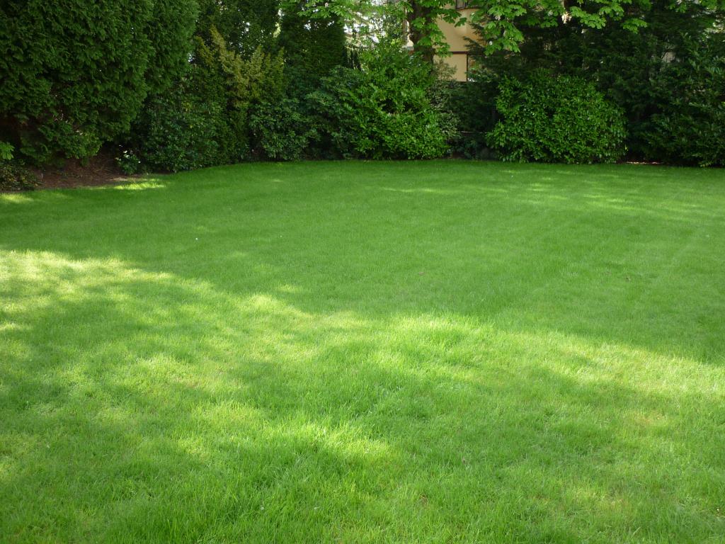 Lawn regeneration - Final result