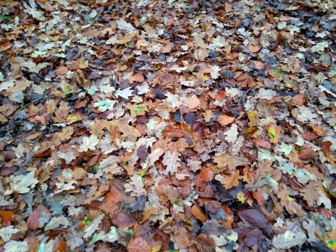 Leaves covering grass