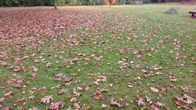 Leaves on a large lawn