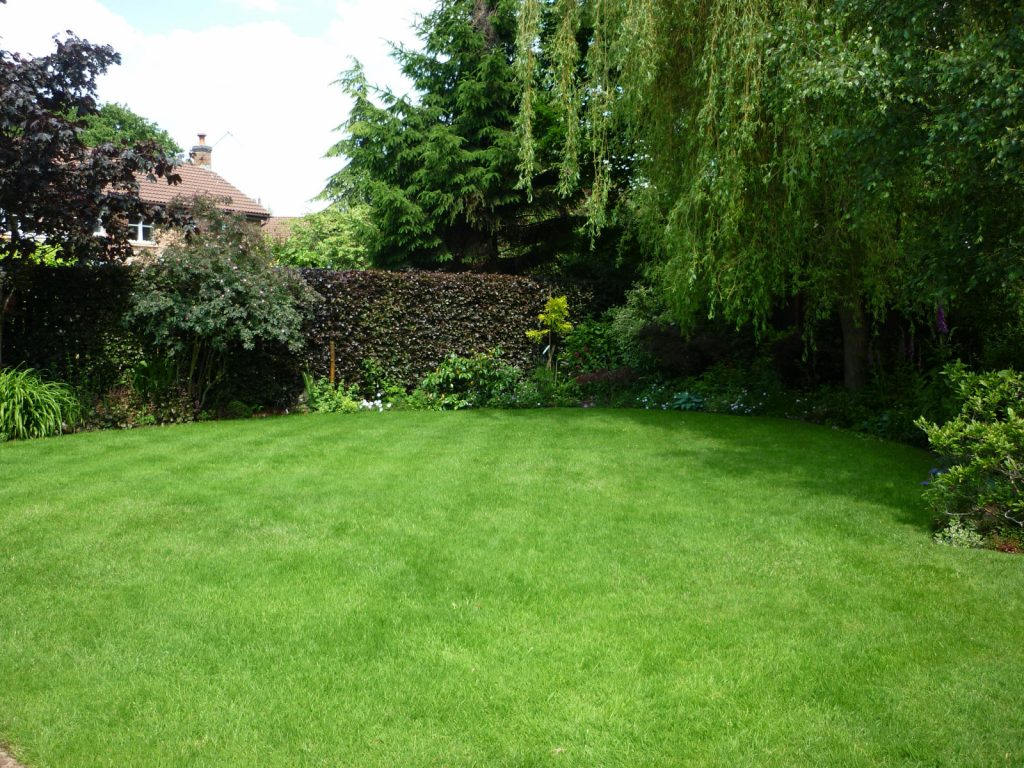 An even, green lawn with a shady area under a willow tree.