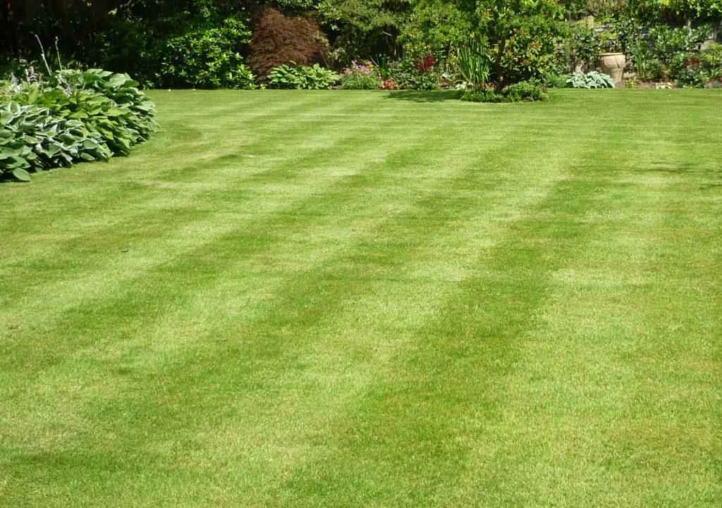 Monkerton Lawn care service