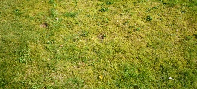 A lawn with a lot of moss