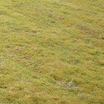 Lawn moss close