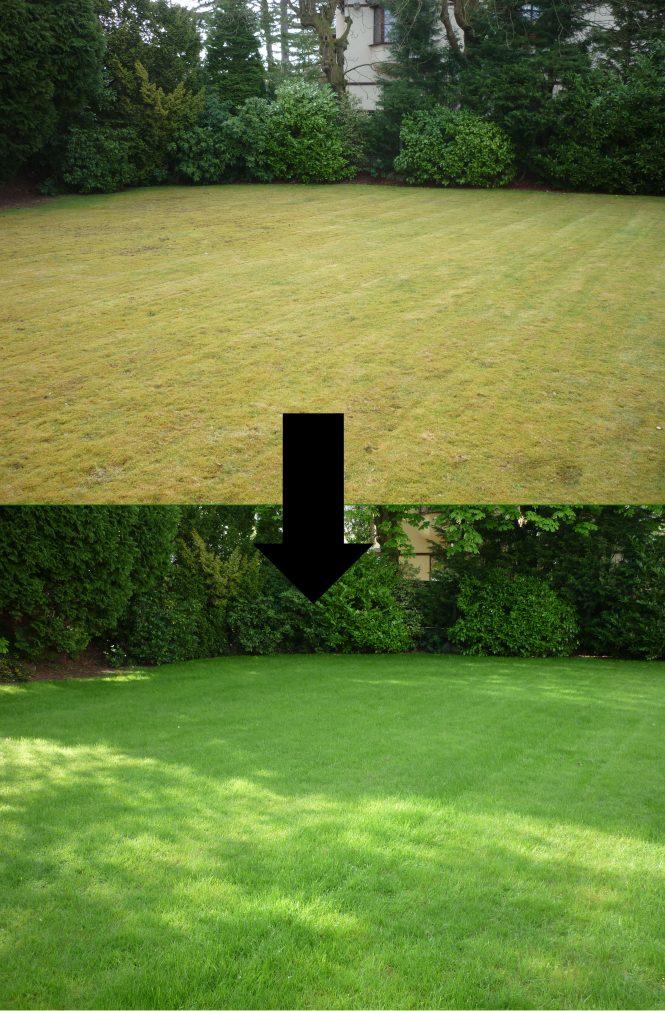 Mossy lawn regeneration
