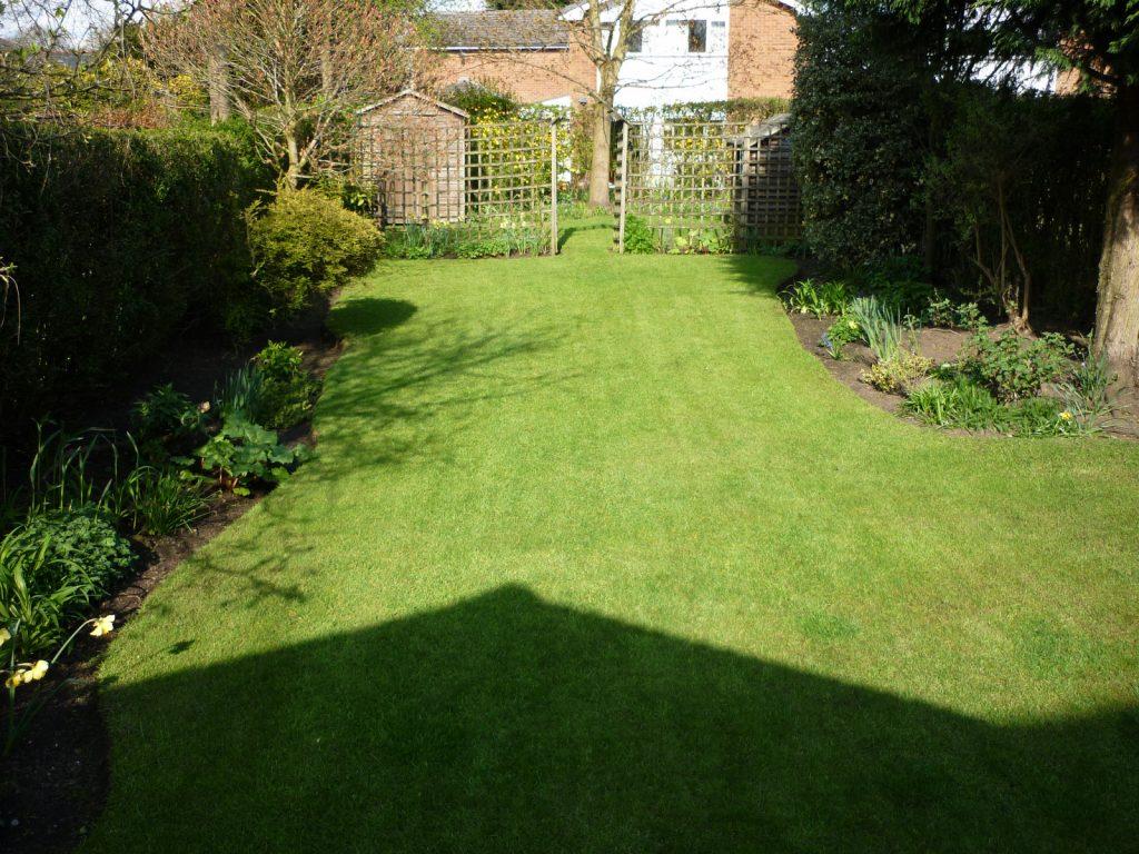 Narrow, suburban lawn.